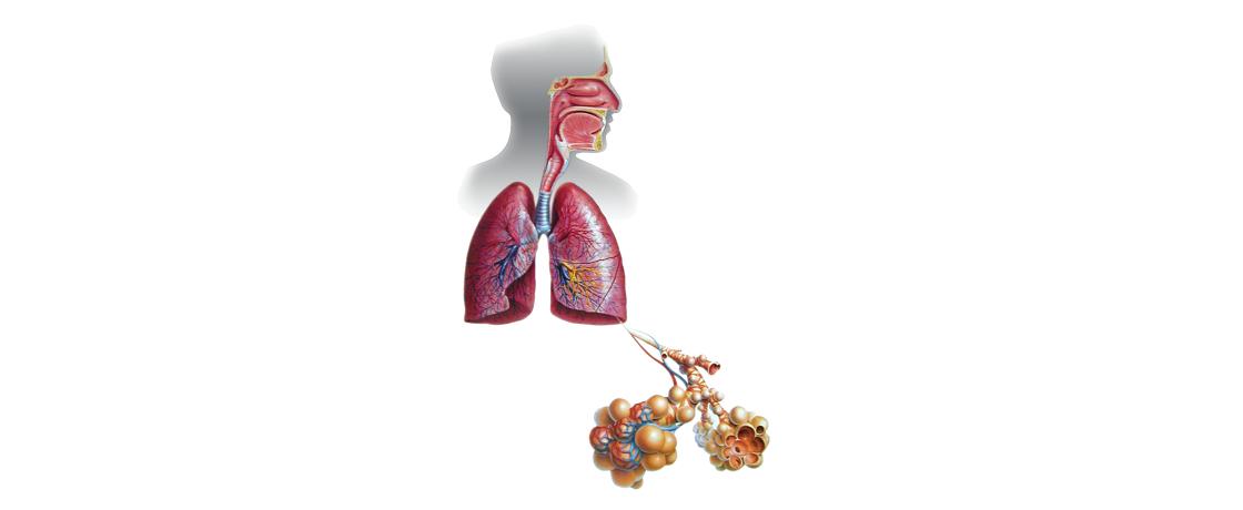 solunum sistemi ve beslenme tedavisi