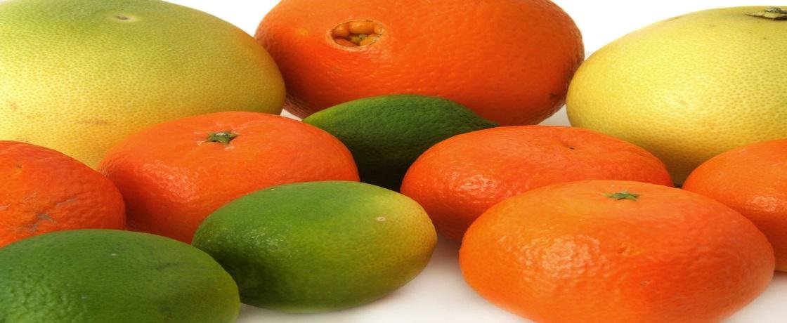 turunçgiller, portakal, mandalina, greyfurt,