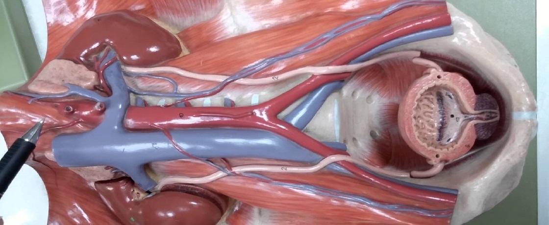 Kalp, damar, kardiovasküler, kolesterol, trigliserit, yağ