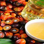palm yağı, palmiye yağı, palm yağı neden zararlı