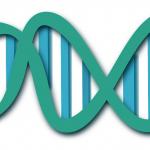 gmo, GDO, Genetiği değiştirilmiş organizma (1)
