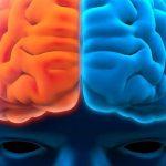 nörolog nöroloji beyin sinir zeka akıl hafıza