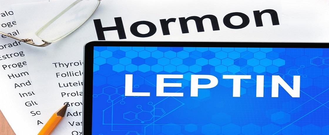 leptin hormonu
