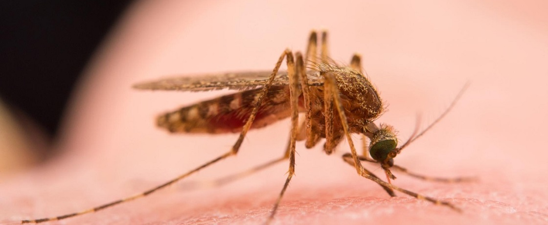 Batı Nil Virüsü, BNV